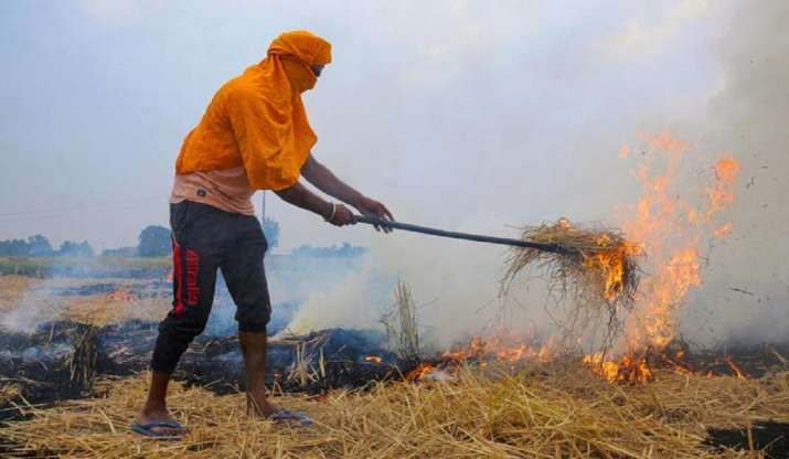 49% jump in stubble burning cases in Punjab this paddy