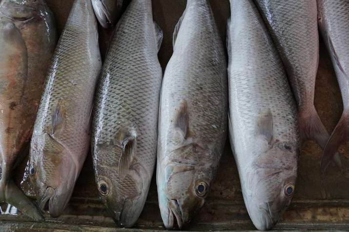 China says COVID-19 detected on more fish exports from India amid growing criticism