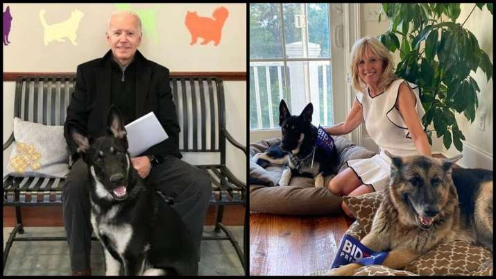 Joe Biden to bring 'DOTUS-Dogs of the United States' Major and Champ to White House