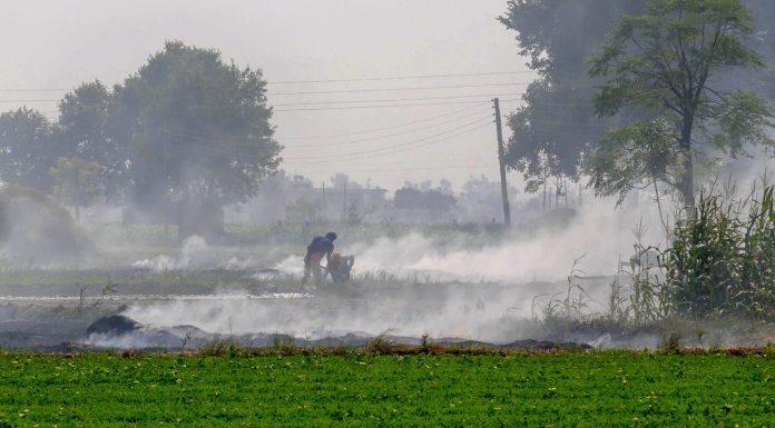 Stubble burning up 44.5% in Punjab, 25% down in Haryana