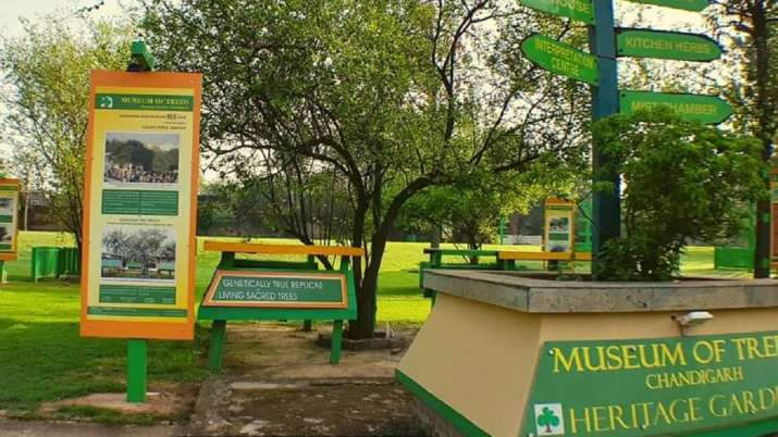 Museum of Trees, Chandigarh