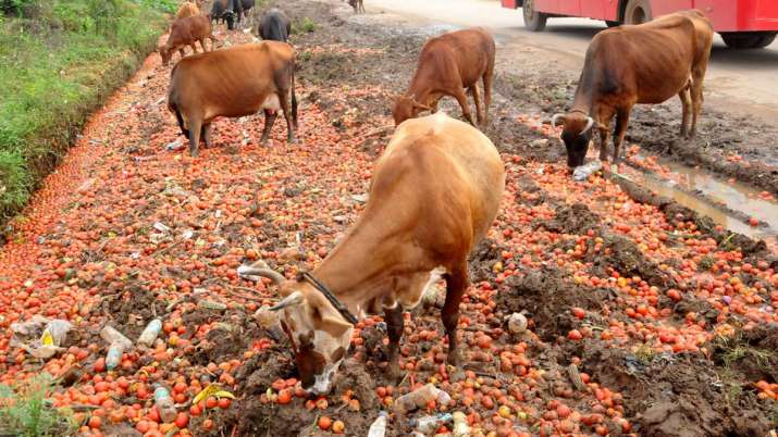cow slaughter bill