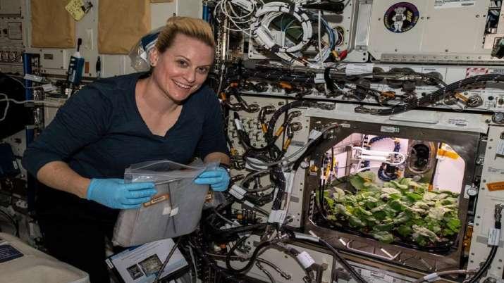 India Tv - NASA, Radish harvest at international space station, Space Station