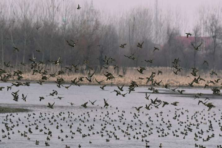 Bird Flu Scare: 35 crows found dead in Delhi, samples collected for testing