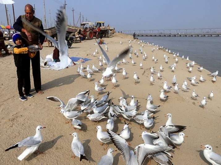 Government confirms bird flu cases in Rajasthan, MP, Himachal Pradesh, Kerala