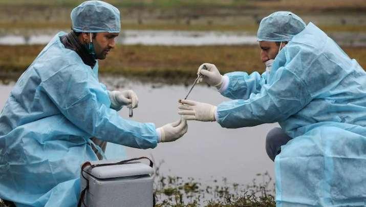 Uttarakhand: Over 30 birds found dead in Rishikesh