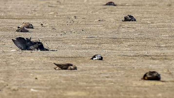 Bird flu outbreak: 4 crows found dead at school in Uttar Pradesh's Jhansi