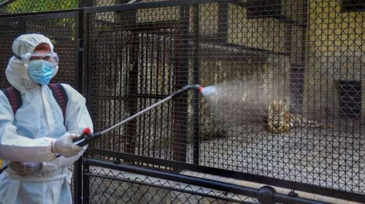 kanpur zoo, bird flu