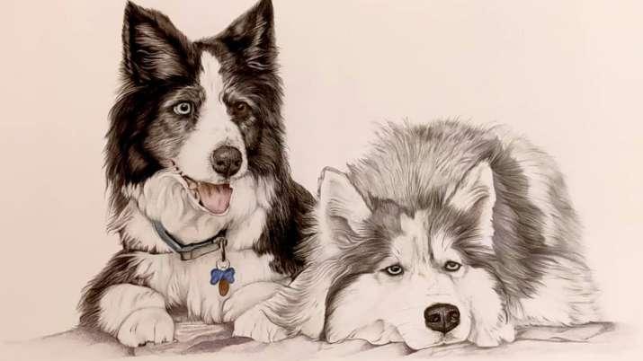 سگهای با استعداد می توانند کلمات جدید را پس از شنیدن آنها درک کنند: مطالعه کنید