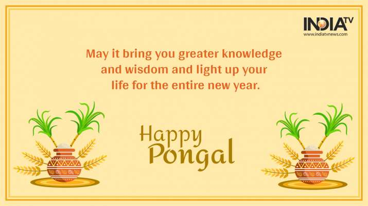 India Tv - happy Pongal 2021: Wishes, Quotes, Facebook, WhatsApp messages, Greetings, SMS, HD images and GIFs