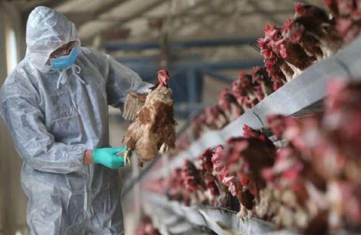 russia bird flu