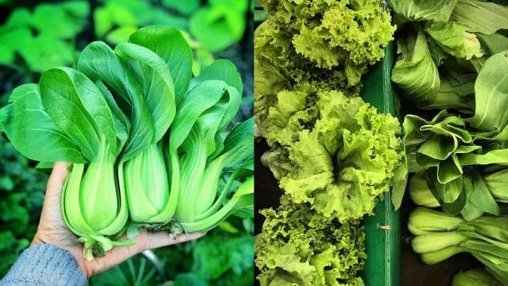 Green leafy veggies may up thinking skills later: Study - India TV News