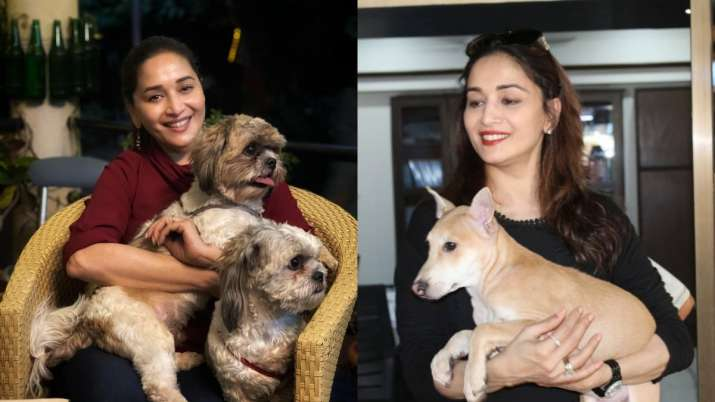 Madhuri Dixit's latest post proves she is true 'puppy lover' | see pics