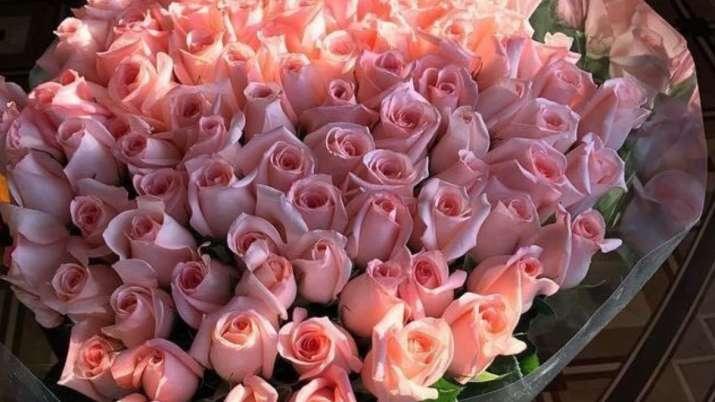 India Tv - Pink Rose