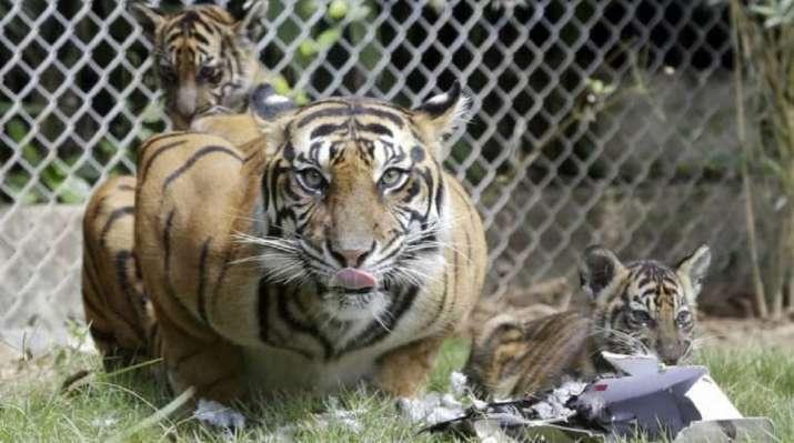 Animals fake death for long periods to escape predators: Study