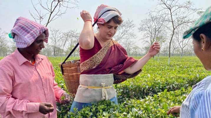 priyanka vadra, assam, priyanka assam tea garden