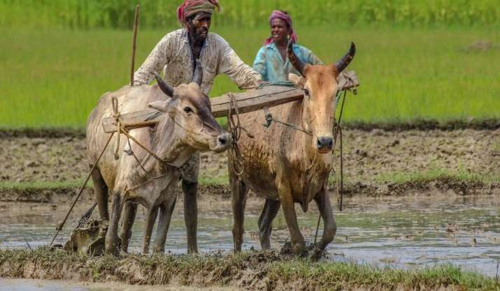 Target of doubling farm income won't be achieved if new agri laws not implemented: Ramesh Chand