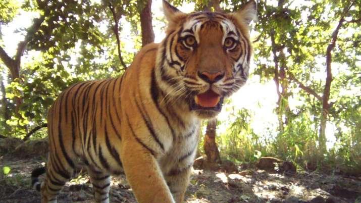 World Wildlife Day 2021: PM Modi, Twitterverse urge people to save wild animals