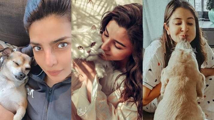 Priyanka Chopra, Alia Bhatt, Anushka Sharma, Bollywood celebs and their adorable pets