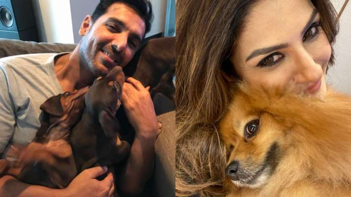Covid19: Bollywood celebs turn to pals with paws to battle lockdown blues