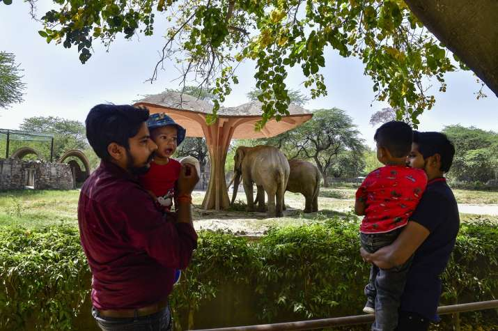 Delhi Zoo reopens after year, ticketing chaos, crowding