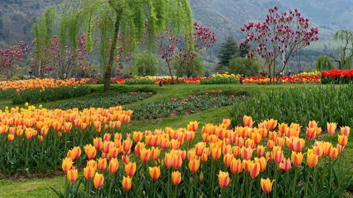 Kashmir's two-day 'Tulip Festival' concludes with