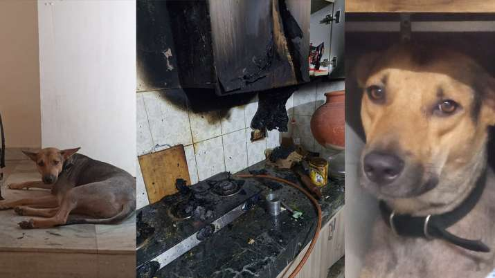 Pet dog saves family from fire in Greater Noida, raises