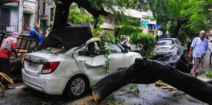 Kolkata Municipal Corporation workers cut a tree after it