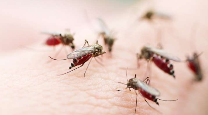 The IEC will focus on improving models like the one Malaria