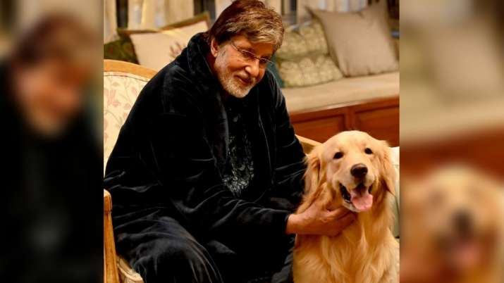 Amitabh Bachchan's picture with his special 'co-star' will drive away your Monday blues; see here