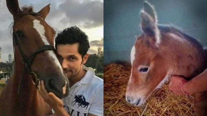 Randeep Hooda names newborn foal Hope after his mother Asha; see pics