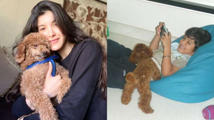 Shanaya Kapoor recalls an emotional note in courtesy of Scooby the dog: Calm down, my angel