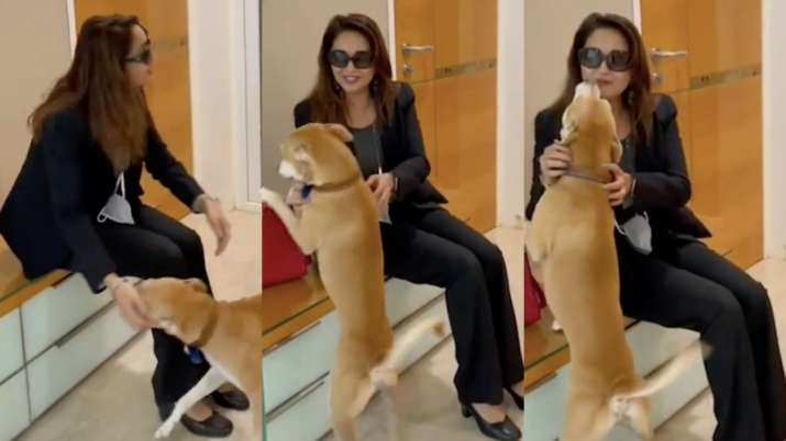 Madhuri Dixit's pawdorable video playing with her doggo is the best on the internet TODAY