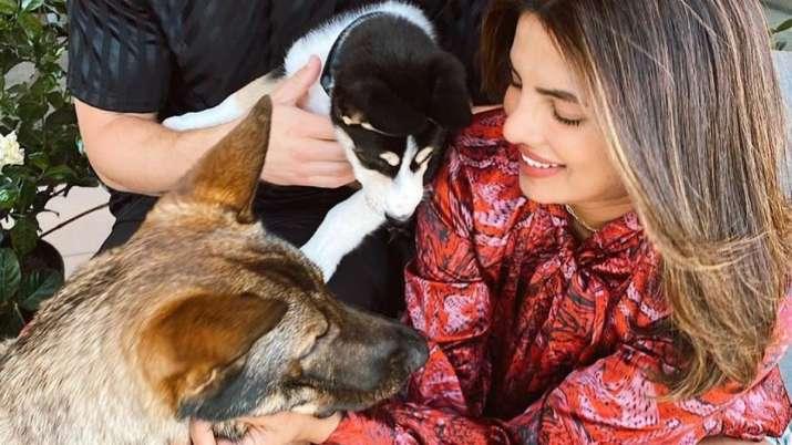 Priyanka Chopra dedicates new tattoo to her pet dogs Diana, Gino and Panda