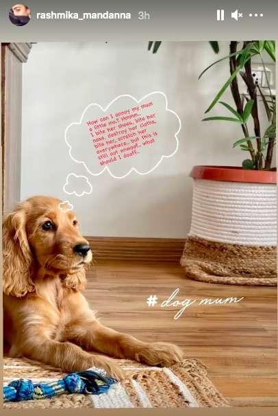 India Tv - National Crush Rashmika Mandanna shares glimpse of her new house with cute pic of pet dog Aura