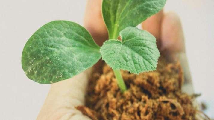 saplings, Delhi, plant, saplings, environment, environment updates