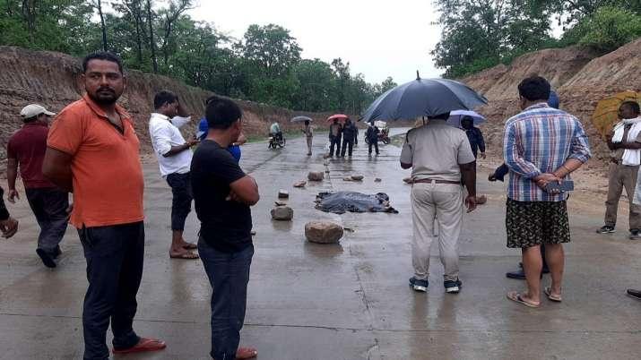 Tiger cub, cub killed, vehicle hit, crossing national highway, Madhya Pradesh, Umaria district, Nati