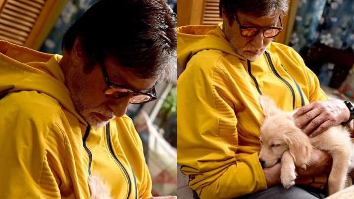 Goodbye: Amitabh Bachchan shares adorable pictures cuddling his new on-set companion