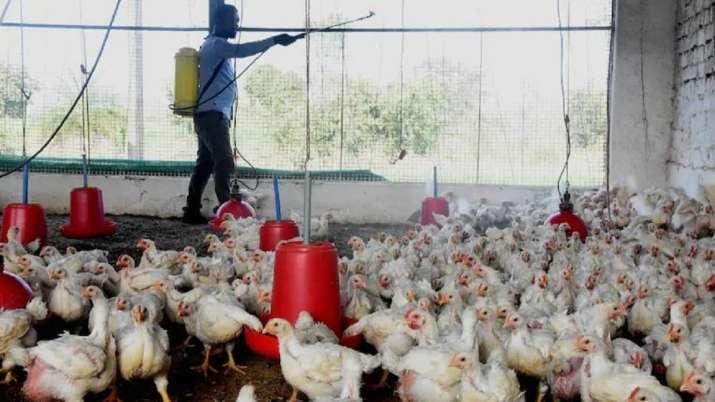 Bird flu death india, india first bird flu death, H5N1 Avian Influenza death india, bird flu cases,