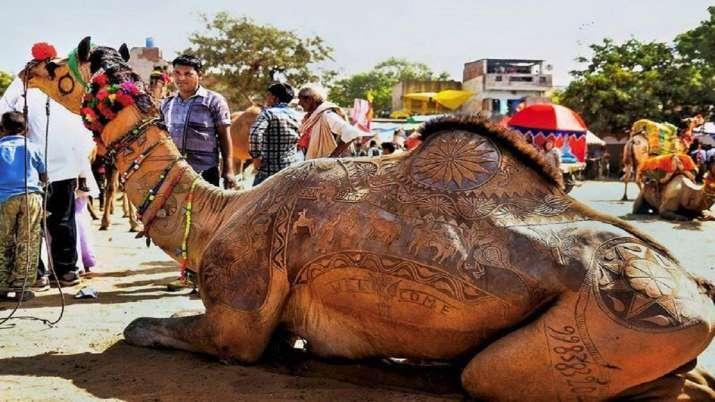 COVID, booster shot, Rajasthan, camel, economy, rajasthan latest national news updates, remote villa