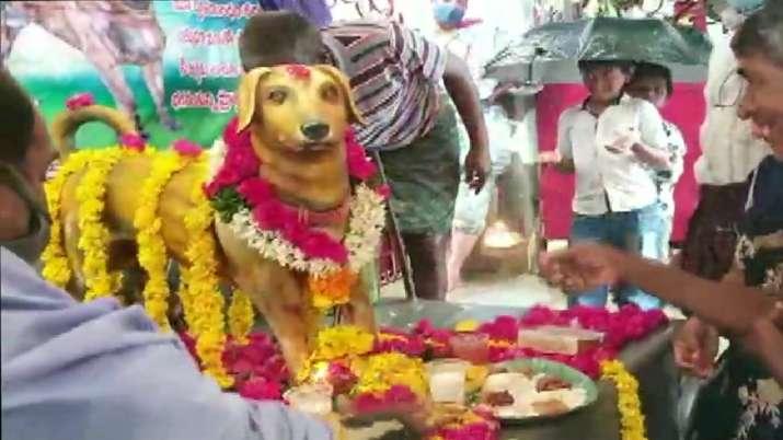 India Tv - Dog, Andhra Pradesh