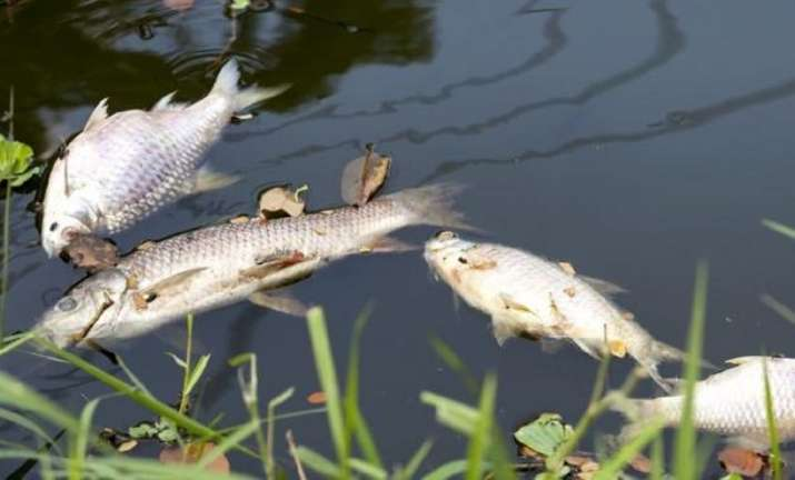 Large number of fish found dead in Berhampur pond