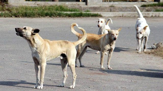 Stray dogs have right to food, feed them without causing