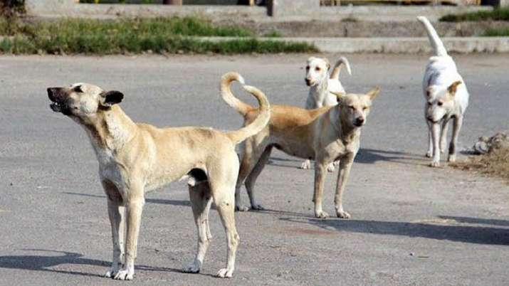 FIR lodged after stray dog found dead in south Delhi's
