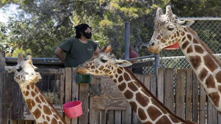 US Oakland Zoo, vaccination, animals, COVID, coronavirus pandemic, covid latest news updates, covid