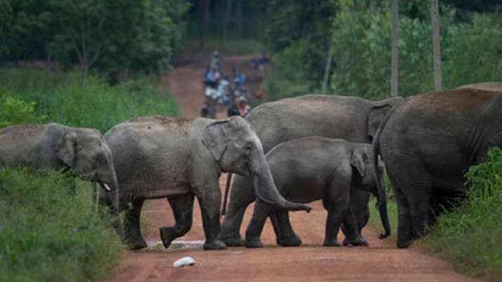 two elephants, female elephants, elephants electrocuted, Assam, latest national news updates, assam