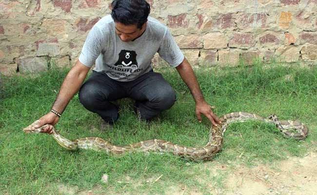 python vadodara