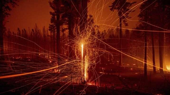 California wildfire, wildfire season, wildlife damage, latest international news updates, California