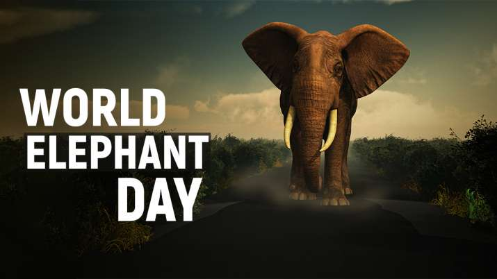 World Elephant Day 2021: History to Significance; all you