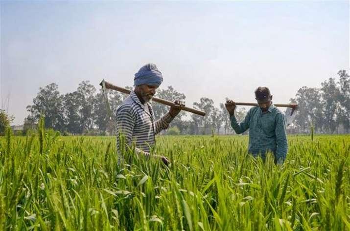 farmers complain of crop damage